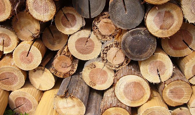 木材の知識